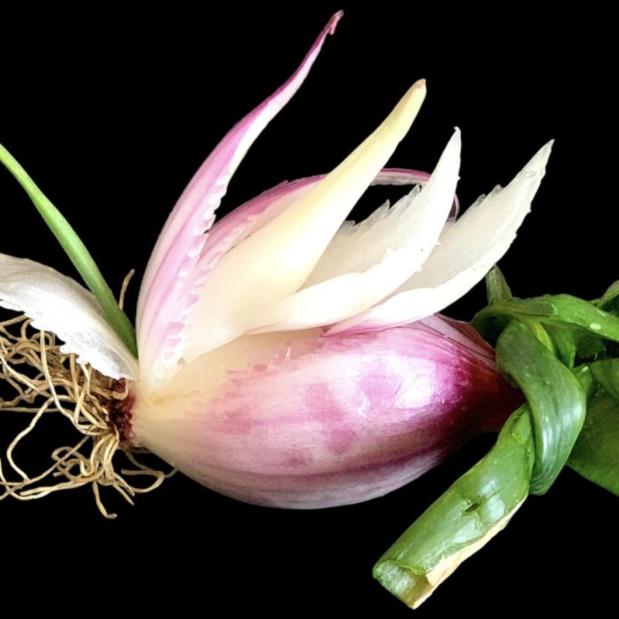 Decorazione-Argilla-Pesce-Stile-Thai-Intagli-Devita-Photo